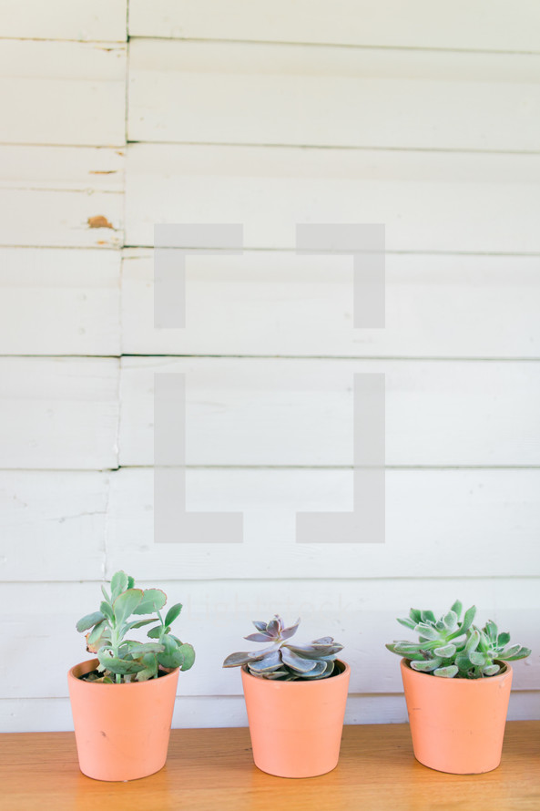 three potted succulent plants