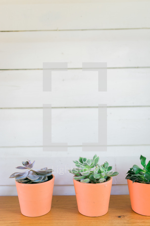 potted succulent plants in a row