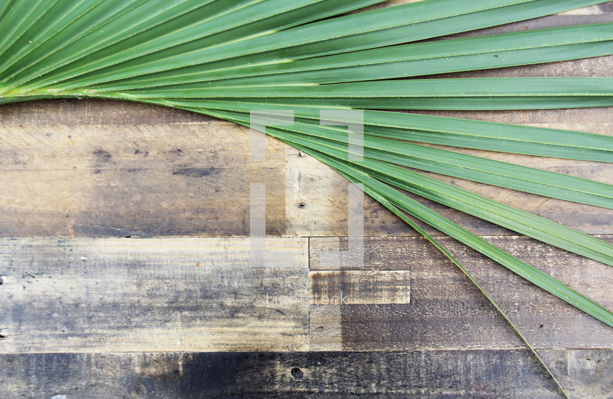 Palm frond on wooden background