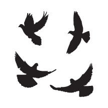 Flying doves silhouette pack.