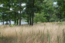 Grass and trees with a pond in the background.