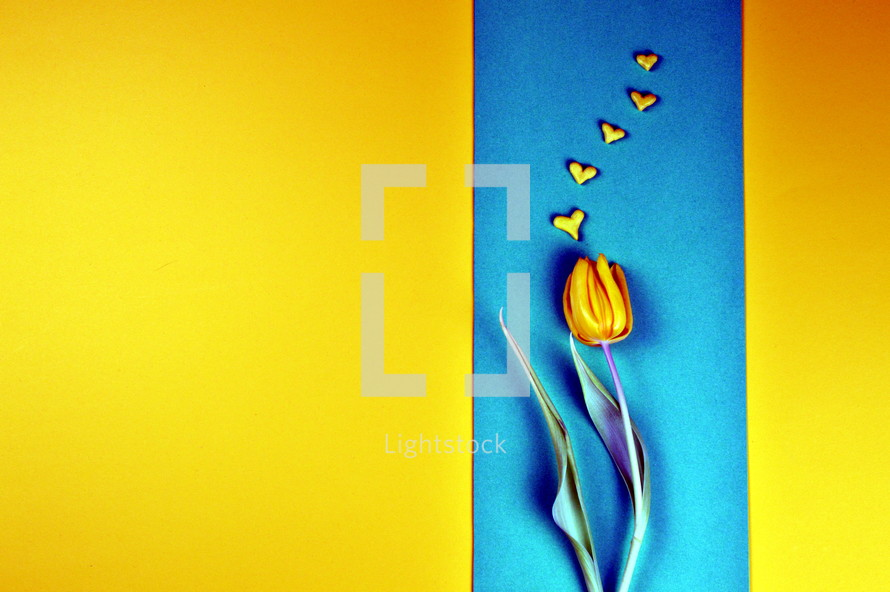 yellow tulip and hearts