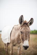 a donkey for Palm Sunday