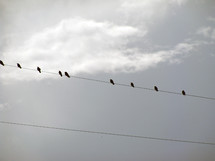 A group of birds on a telephone line resting between flight. I call this picture Birds on a wire for obvious reasons but it is always fun to see birds hanging out together on telephone lines grouped together like a bunch of music notes on a sheet of music.