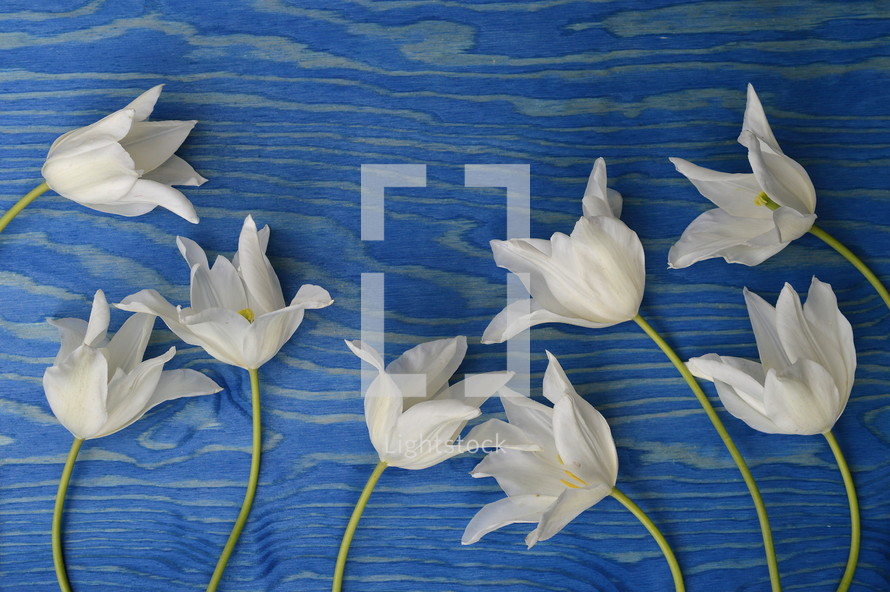 white flowers on a blue wood background