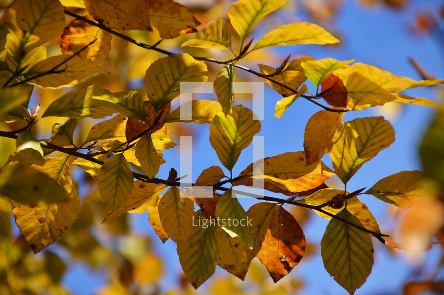 colorful autumn leaves.  autumn, fall, leaf, leaves, colorfully, colorful, multicolored, change, changed, changing, fallen, season, seasons, bright, red, orange, yellow, brown, dead, dying, die, death, dead leaves, background, sad, sadly, blue, unhappy, gloomy, sorry, sorrowful, mourn, mournful, mournfully, desolate, woeful, upset, dolorous, tearily, tear, tears, plant, nature, outdoor, green, grey, lonely, natural, October, November, mood, vanish, pass, fallen off, texture, leaf pile, sadness, grief, sorrow, mourning, misery, depression, dolorousness, pain, hurt, anguish, dolorous, sky, blue