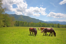 Horses grazing in field surrounded by mountains.
