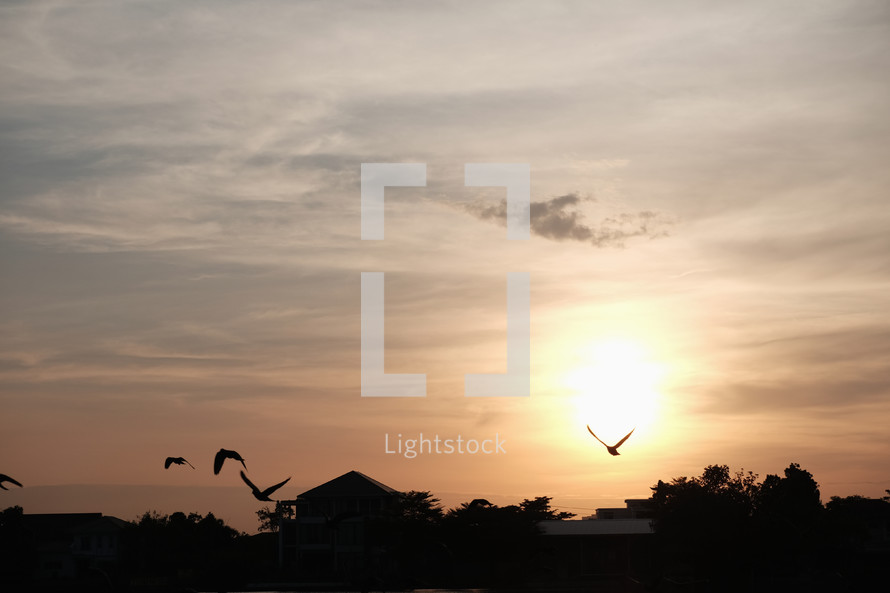birds flying over a house at sunset