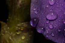 An up-close, macro photograph of a flower petal with a moisture from a recent rain.