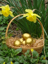 gold colored Easter eggs in a basket and yellow daffodils outdoors