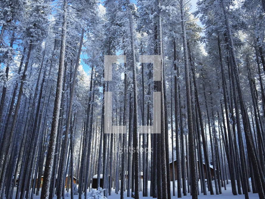 cabins and winter trees