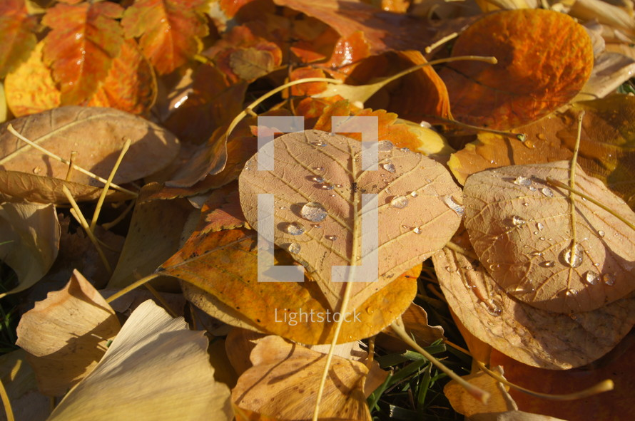 Fall leaves in Autumn sprinkled with rain drops