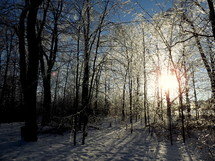 Sun shining though dormant trees after a snowfall.