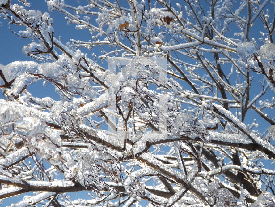 Shimmering ice on frozen tree branches.