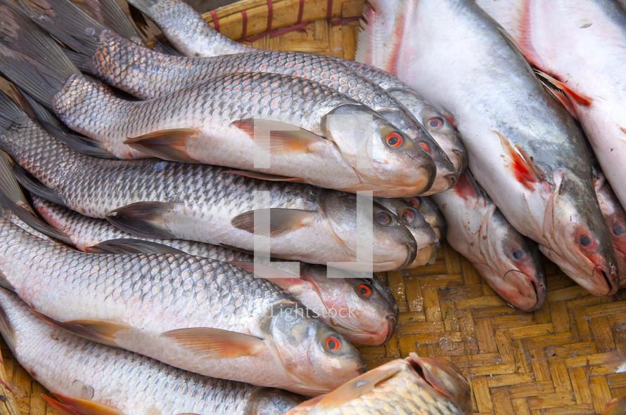 Fresh fish at a market