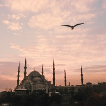 bird in flight and a distant Mosque