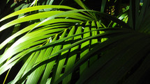 Green Fronds catch sunlight on a jungle floor in the Amazon Basin in South America