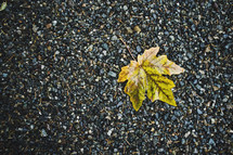 yellow leaf in gravel