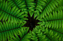 A circle of fern leaves.