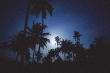 Silhouettes of palm trees at night.