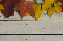 fall leaves border on wood boards