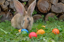 bunny and Easter eggs
