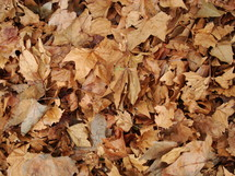 fallen off leaves in autumn are making a nice texture