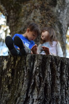 brother and sister sitting on a tree stump