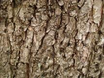 Bark on a tree.