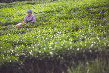 A migrant worker in a field in India.