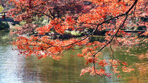 red fall leaves on a tree branch hanging over a lake