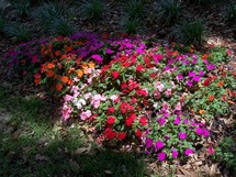 A bed of Annuals soak up the sun in a summer garden in Central Florida filled with purple, red, pink and orange flowers under a tree.