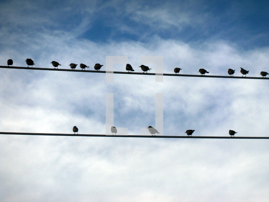 A flock of Birds congregating together on telephone wires forming a congregation fellowshipping together as a community that gather together for a common purpose.