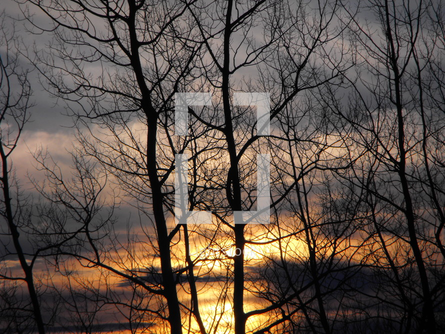 sunset and winter trees
