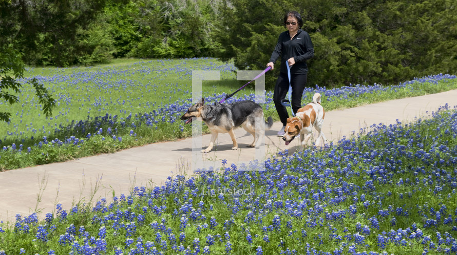 woman walking her dogs along a path lined with blue bonnets