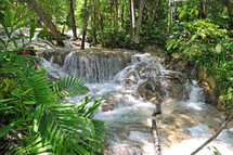A rushing river in a tropical forest.