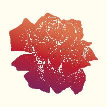 colorful hand drawn rose illustration.