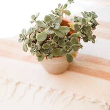 potted plant on a table cloth