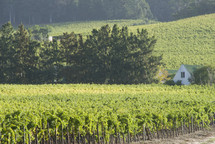 distant house overlooking a grape vineyard