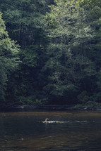 forest and a swimming hole in Asheville, NC