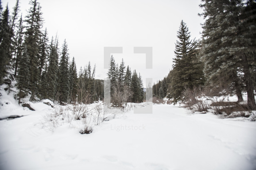 winter snow on a hill