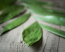 green leaves on wood