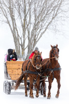 horse drawn carriage in the snow