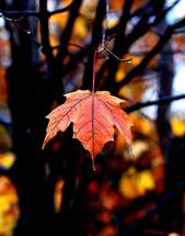 New England fall foliage.
