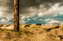 single tree trunk on rocky strewn field - storm clouds