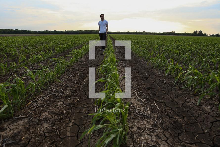 man walking in corn field rows