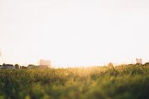 warm sunlight on green grass