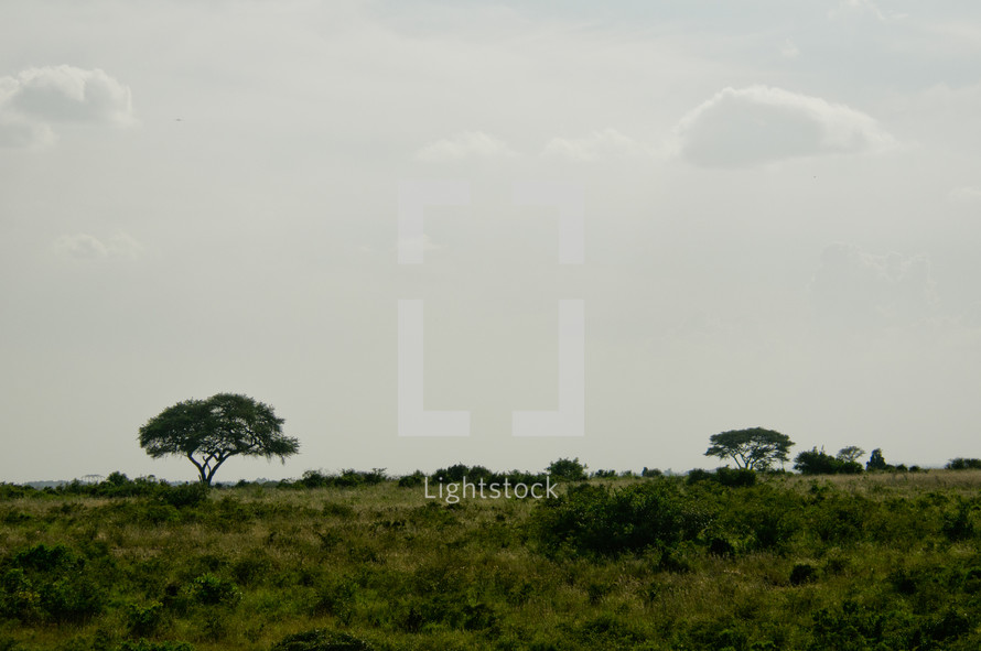 green grass and foliage of Nairobi savanna