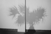 The shadow of a tree on a wall