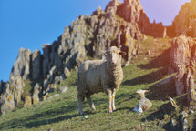mother sheep and lamb on a hill